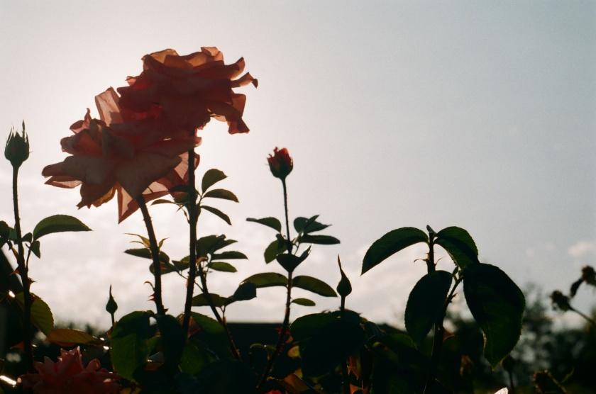 Flower 2/4